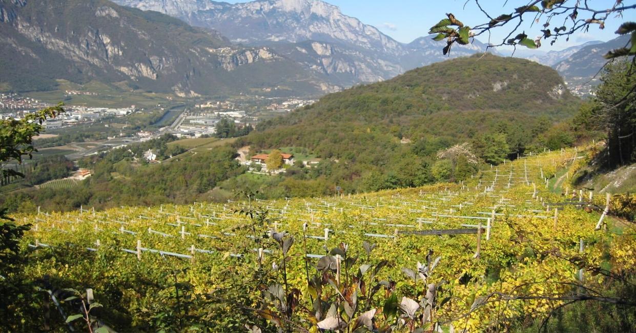 Panoramica vigneti della Tarter Vini & Distillati